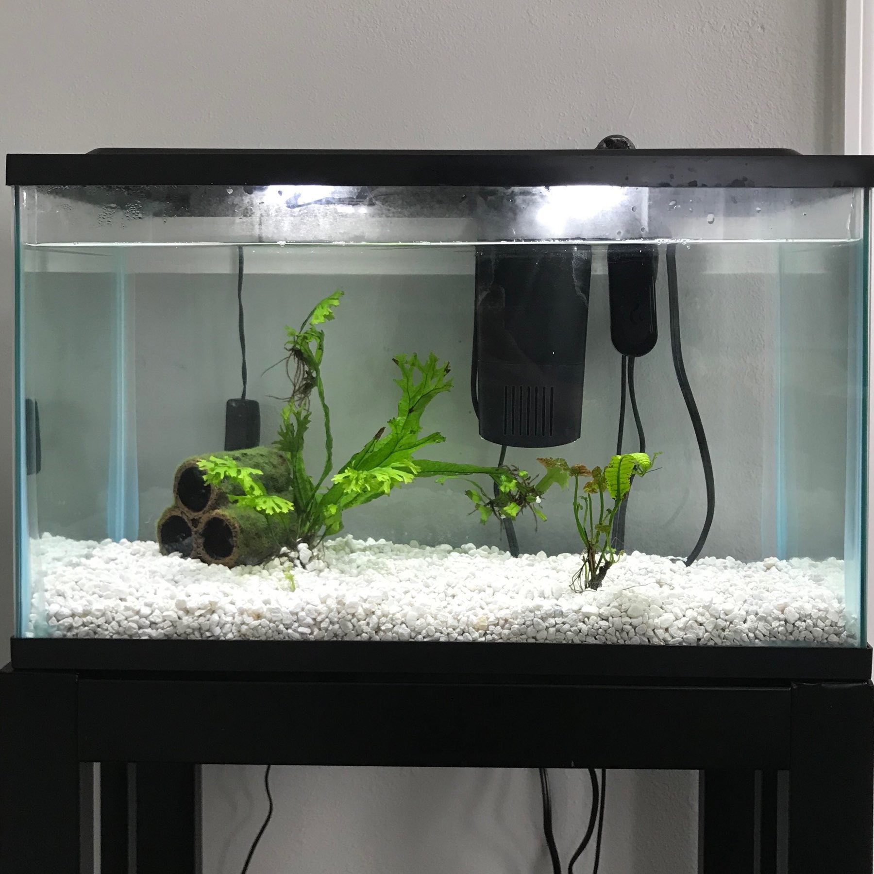 aquarium tank with two plants and a mossy log inside